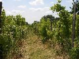 Onbebouwde grond in Hongarije