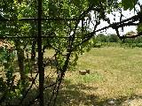 Onbebouwde grond te koop in Kővágószőlős